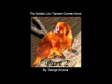 The Golden Lion Tamarin Comes Home Part 2