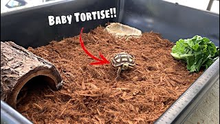 My BABY Tortoise gets NEW HOME!!