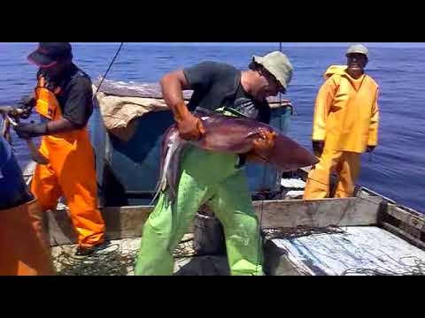 pesca de pota cruz de chalpon paita 2012