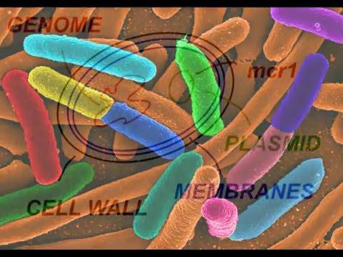 E Coli bacteria resistant to 'last chance' Colistin antibiotic discovered. mcr1 gene.