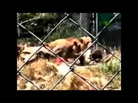 gente por los animales: