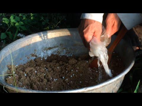 DIY - Fishing Tips -How to Make Fish Chum Bait -Mồi câu Lục Cá Trắng(1)Bắt Luôn Tay