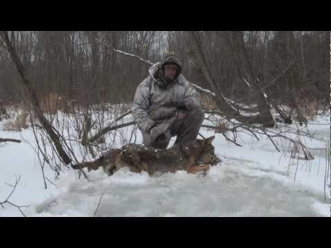 coyoye hunting SW ontario
