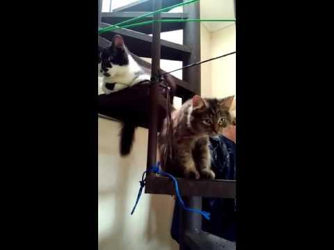 download lagu Nyantai.. Dua Kucing Nongkrong Di Tangga gratis