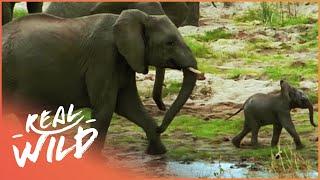 Elephants On The Run [Wildlife Documentary] | Wild Things