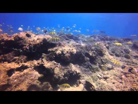 Diving / Snorkeling Ponta do Ouro, Mozambique