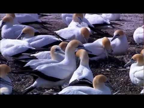Wildlife-Video campione di Windows