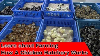 Tour How a Hatchery Works