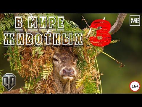 """Стрим #79 - """"В мире животных 3"""""""