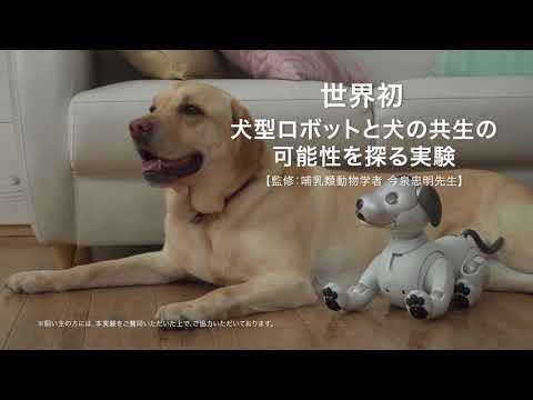 ソニーの犬型ロボット「aibo」と犬の共生の可能性を探る実験動画 (07月27日 11:00 / 25 users)