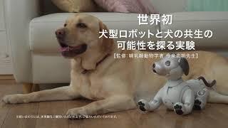 ソニーの犬型ロボット「aibo」と犬の共生の可能性を探る実験動画