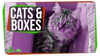 Why Do Cats Love Boxes?
