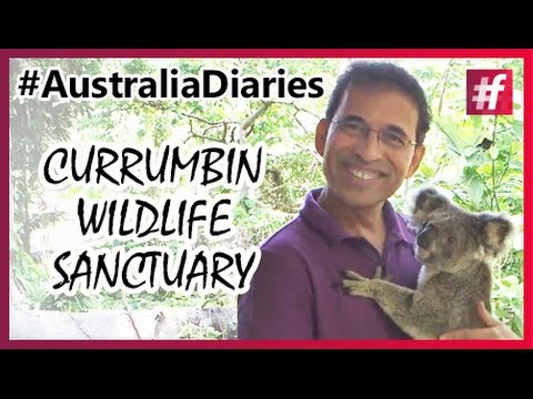 Visit To Currumbin Wildlife Sanctuary in Gold Coast #Australia Diaries
