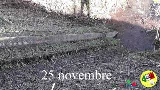 PIENA FIUME PO AGGIORNAMENTO DEL 25 NOVEMBRE. DELTA ( RO)