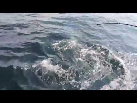 Destin Florida Shark Fishing