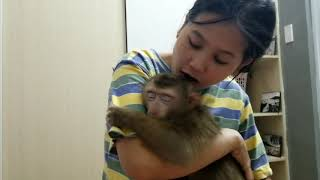 Monkey Baby Nui | Nui was angry with her mother when she left Nui
