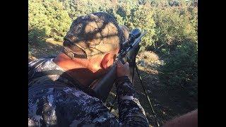 WILD Jaeger Fallow Deer Hunt (Damhirschjagd), Season 5 (Paul Finco)