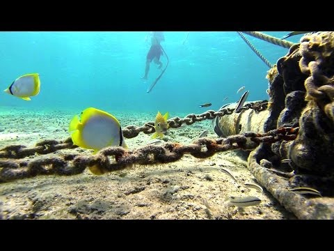 Gopro Hero 3 Underwater Diving Snorkeling Black Edition Mexico Cozumel Caribbean 1080p Hd
