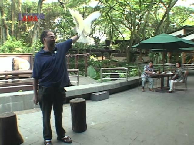 WINDOW   Jurong Bird Park; Singapore