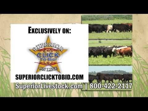 Superior Livestock Tallgrass Yearling Auction