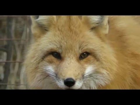 Shubenacadie Wildlife Park Animals