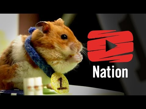 Tiny Hamster vs Competitive Eater