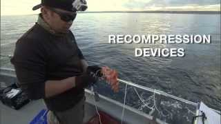 Recompression Devices- Helping Anglers Fish Smarte