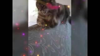 Cute cat - Virginia