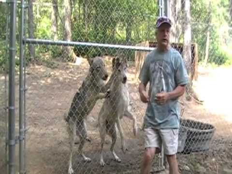Tour Captive Wolf Facility