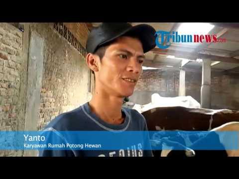 Daging Langka, Rumah Jagal di Jakarta Juga Enggan Potong Sapi