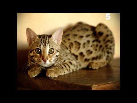 Top 10 felini più belli del mondo