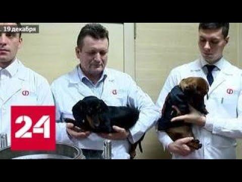 Не та реакция: изобретателей технологии жидкостного дыхания обвинили в живодерстве - Россия 24