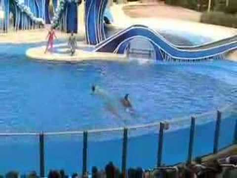 SEA WORLD DOLPHIN SHOW ORLANDO part 1 Video