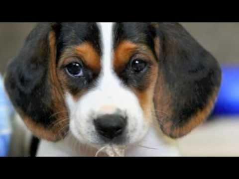 I dieci cani pi belli youtube for I cani youtube