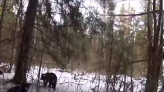 Охота на медведя, есть жертвы! Bear hunting, there are victims!