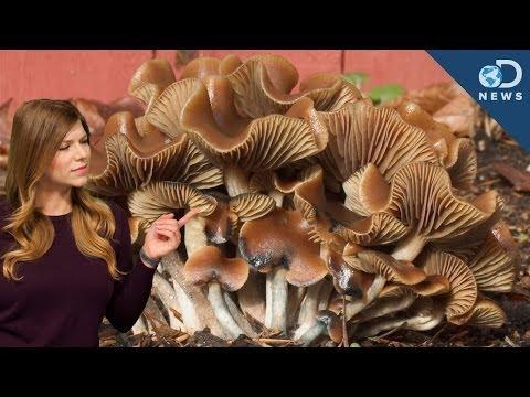 How Do Magic Mushrooms Expand Your Mind?