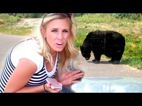 Bear Attacks My Car