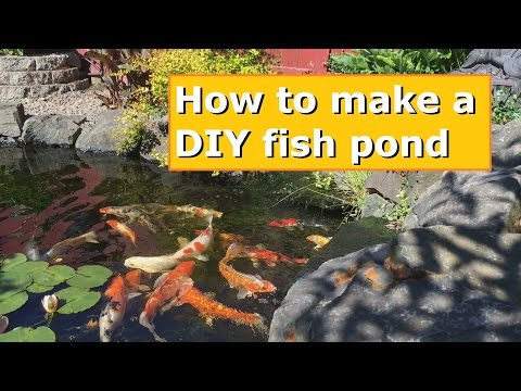 How to make your own DIY fish pond