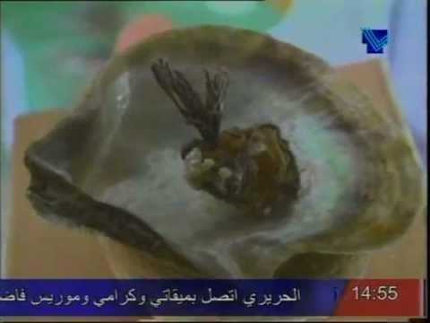 Lebanese Marine Museum  -  متحف غرائب البحر - جعيتا