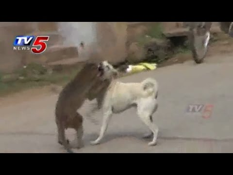 Monkey and Dog Friendship in Guntur : TV5 News