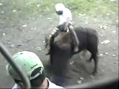 Great Bull Riding Action from Nicaragua!!