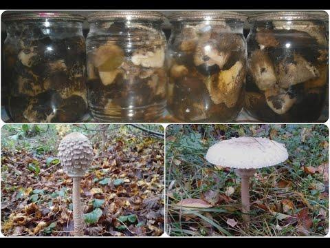 """Маринованные грибы """"Зонтики"""""""