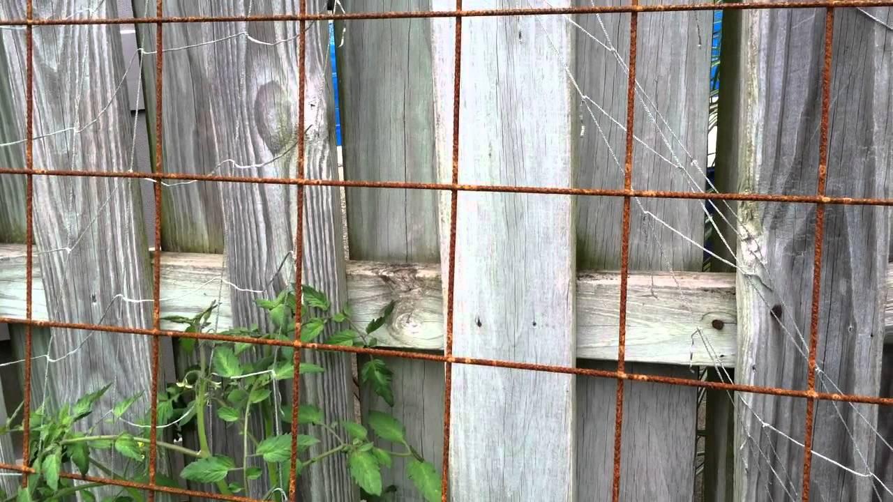 Wire Mesh Trellis Rusty For Veggies Remesh Youtube