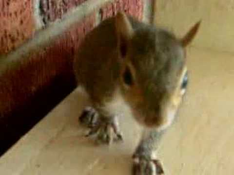 Squirrels Everywhere! 7-8 Week Old Squirrel Antics!