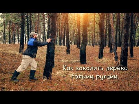 Заготовка дров в сыром лесу или как завалить сухостой голыми руками