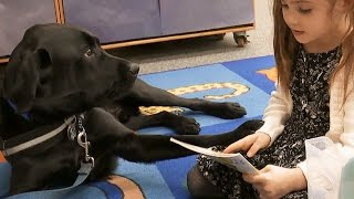 Inside California Education: Service Dog in the Classroom