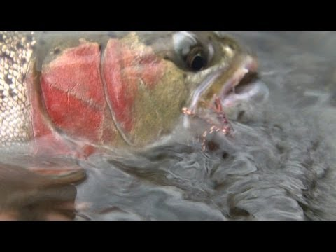 Steelhead Outfitters - Deschutes River - Fishing with Ladin