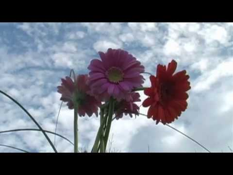 Song #45 - But today, there's blue skies, Piano music by Paul Collier, Flower video by ScenicVideos