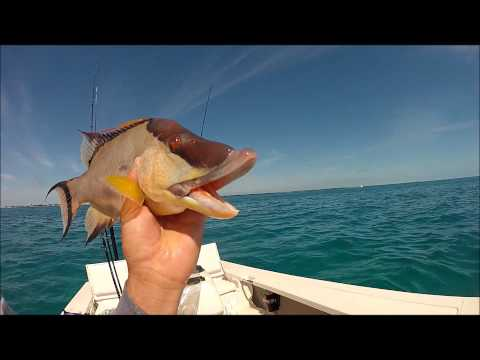 Catching Hogfish on Spinning Gear in Marathon Florida