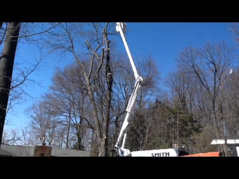 Tree work,it's in our blood